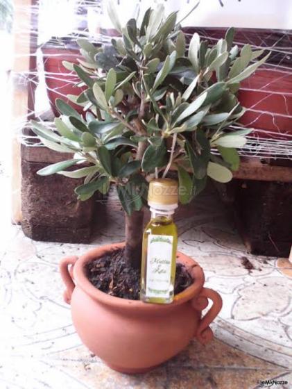 Ulivo  in terracotta con bottiglietta olio Nozze in Puglia