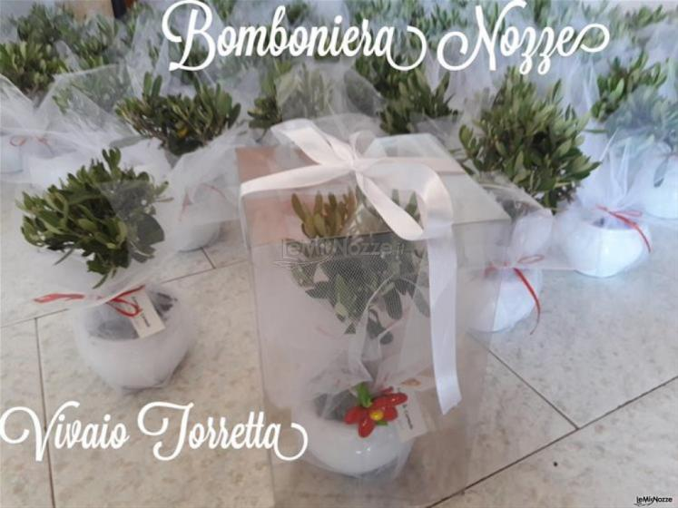 Ulivo in porcellna con scatola e confetti rossi Nozze a Milazzo