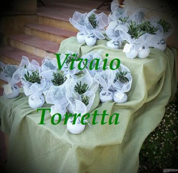 Ulivo in rete Vivaio Torretta