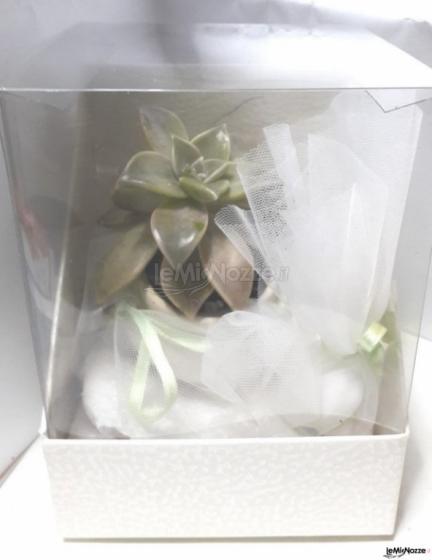 Pianta grassa mini   in scatola  doppia con confetti bianchi