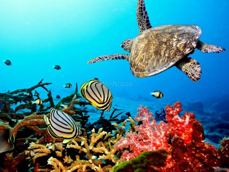I reef piu affascinanti - Madame Voyage
